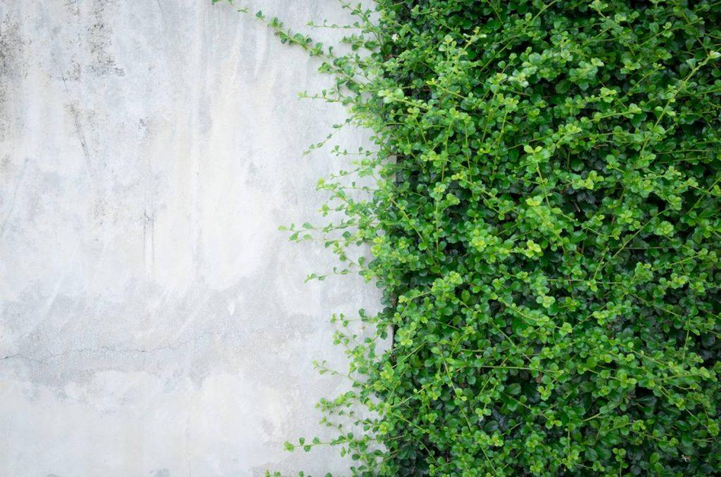 décoration-mur-exterieur-plaque-ciment-plante