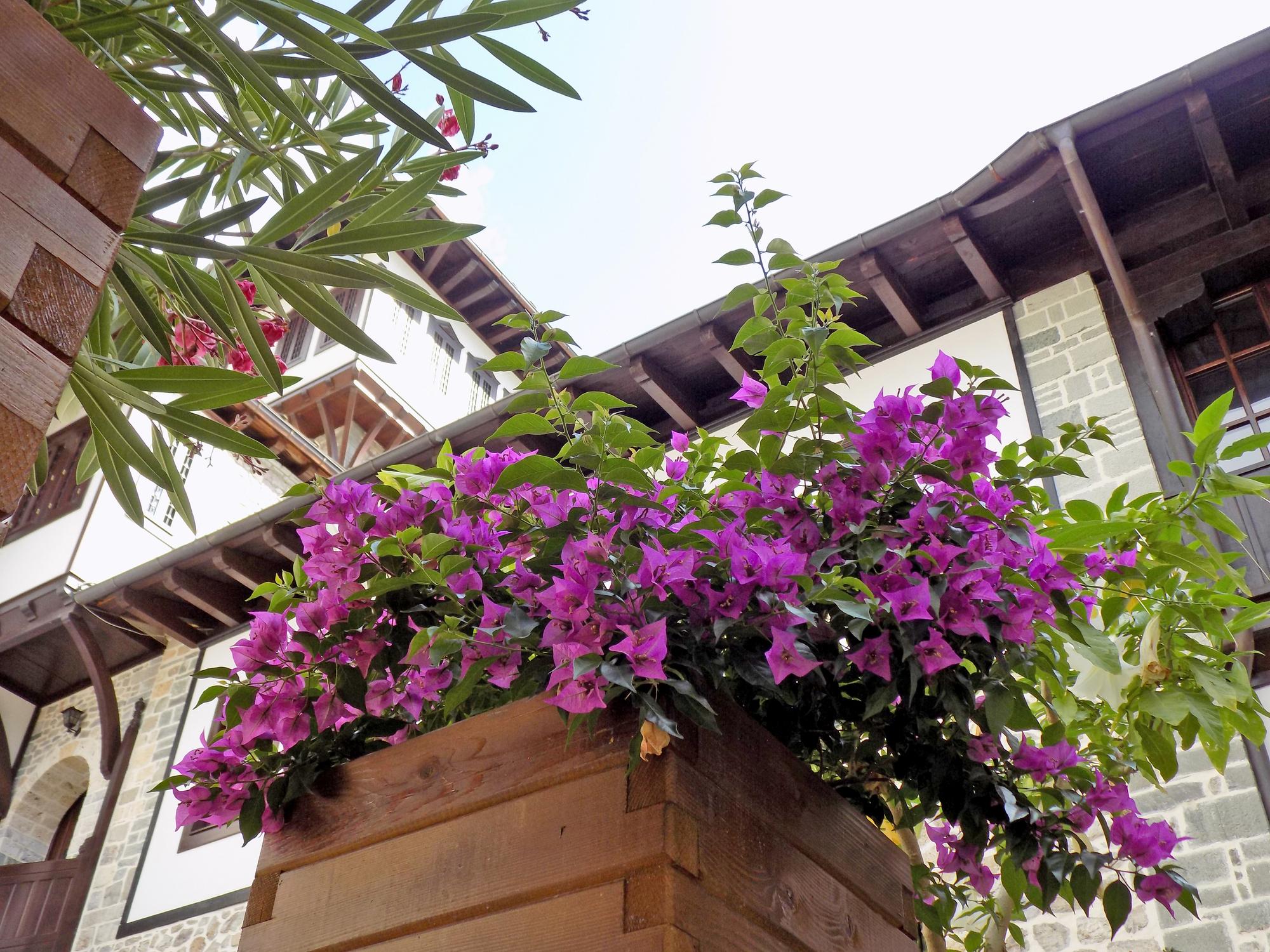 Pot de fleurs fait maison, afin d'apporter des touches de couleurs à votre maison