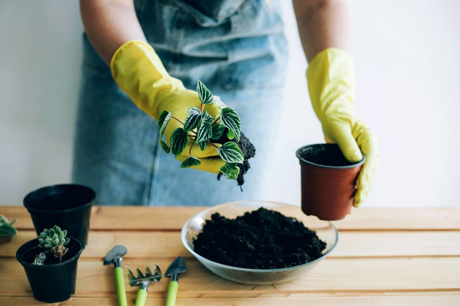Remplir un pot de fleurs