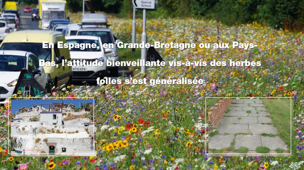 Flore spontanée en Espagne Angleterre et Pays-Bas